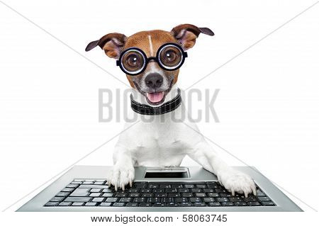 Dog using a keyboard