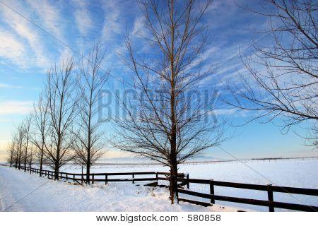 Rathdrum Prairie In Winter