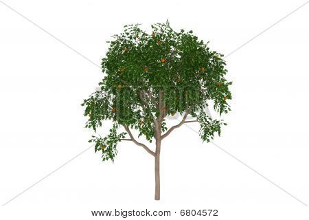 Orange tree tropical isolated
