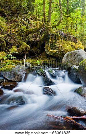 Waterfalls in the Columbia River Gorge, Oregon