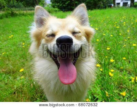 dog close up smile tongue