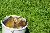 big fishing catch in bucket with water on meadow grass. poster