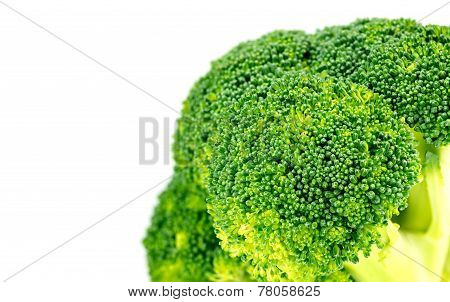 Closeup Of Organic Green Broccoli Floret With White Copyspace