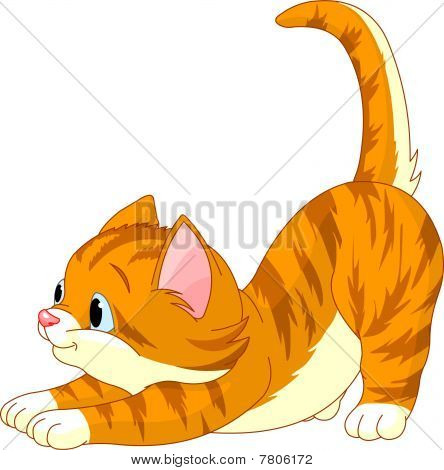 Cute red hair Cat stretching