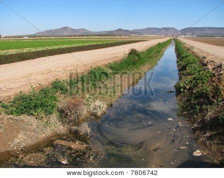 Dirty Irrigation Ditch