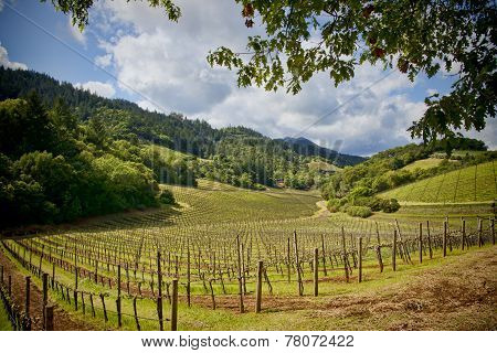 Napa Valley Vinyards