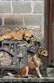 Dogs on the street in San Cristobal de las Casas poster