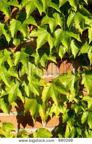 Leaves On Brick