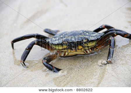 Crab at the beach