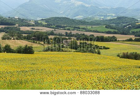 Marches (italy): Summer Landscape