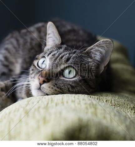 Cat liying on the top of a couch at home poster