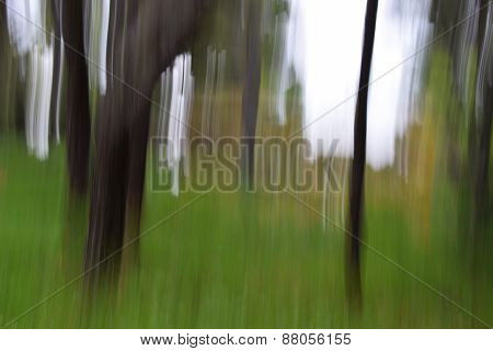 Forest Trees Motion Blur