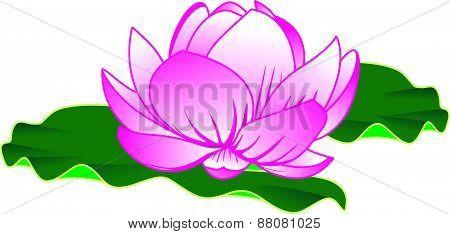 Lotus Vector Design.eps