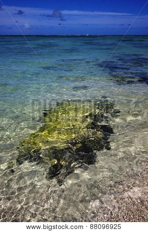 beach and seaweed in ile du cerfs mauritius poster