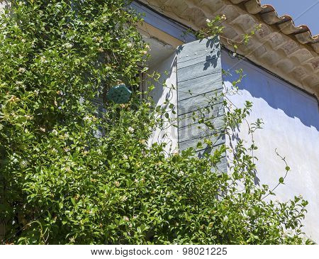 Climbing Plants On A House With An Open Window