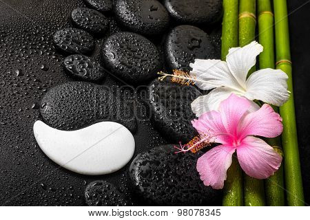 Spa Background Of White, Pink Hibiscus Flower, Symbol Yin Yang And Natural Bamboo On Zen Basalt Ston