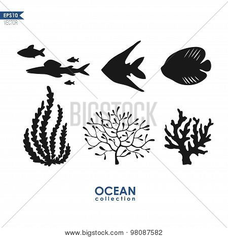 coral reefs and fish