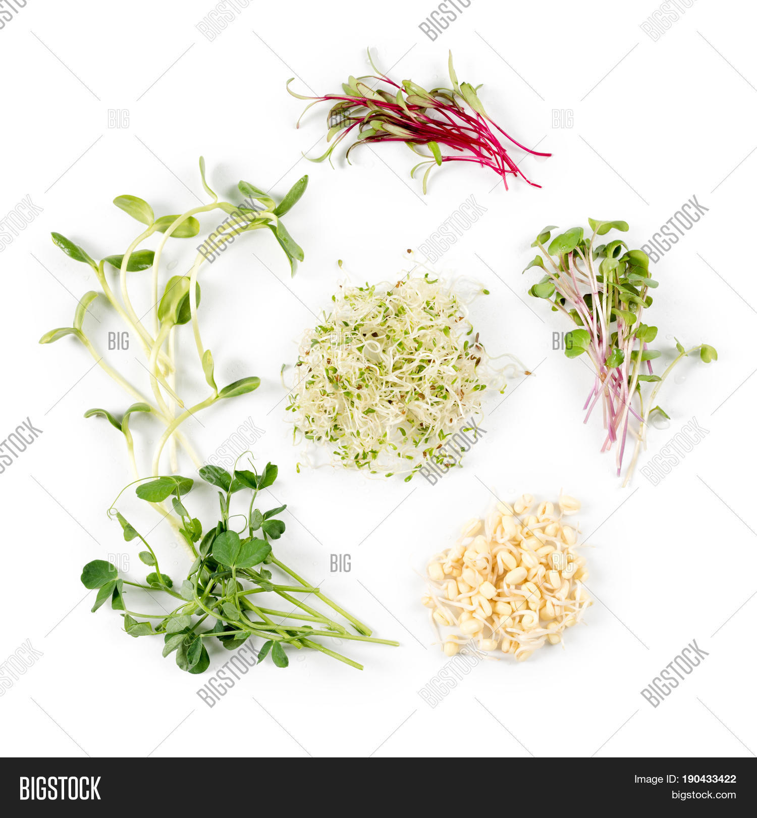 Different Types Micro Image Photo Free Trial Bigstock