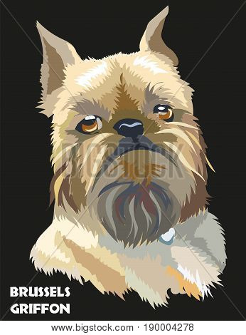 Colored brussels griffon vector isolated portrait on black background