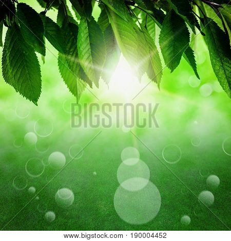 Fresh spring green leaf of a tree, on a background of green sunlight