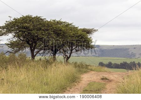 Dirt Road Running Through Natural Trees And Grassland