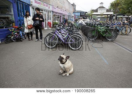 London United Kingdom 6 may 2017: asian tourists look at bulldog in area called The Wharf full of small shops and cafe's on london southbank with rental bikes