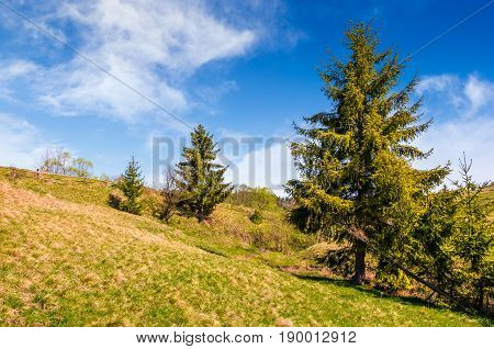 Countryside Landscape With Forest On A Hill Side