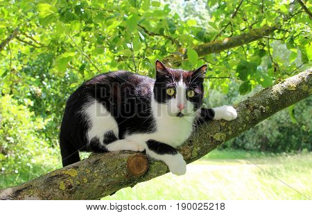 black and white cat with large eyes sitting on a tree