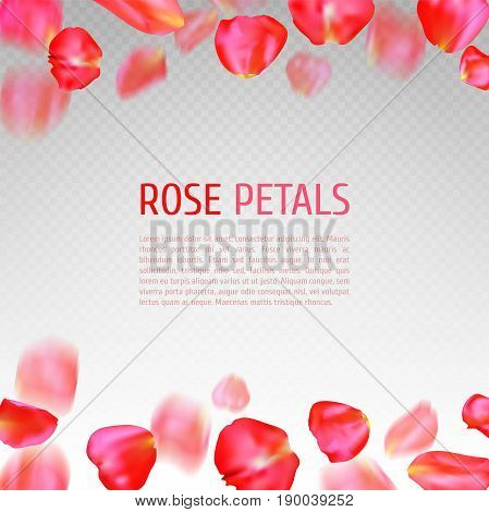 Falling red rose petals border on transparent background. Realistic vector illustration. Wedding invitation or greeting card template
