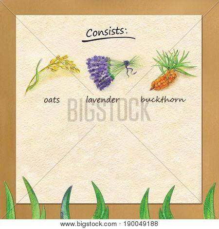 Watercolor summer postcard of oats, lavender, buckthorn