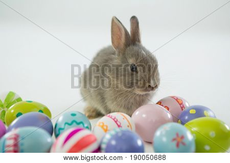 Easter eggs and Easter bunny on white background