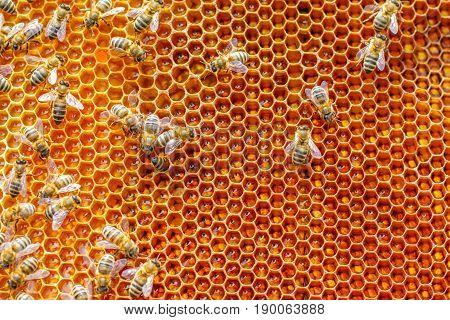Honeycombs Bee Illustration .