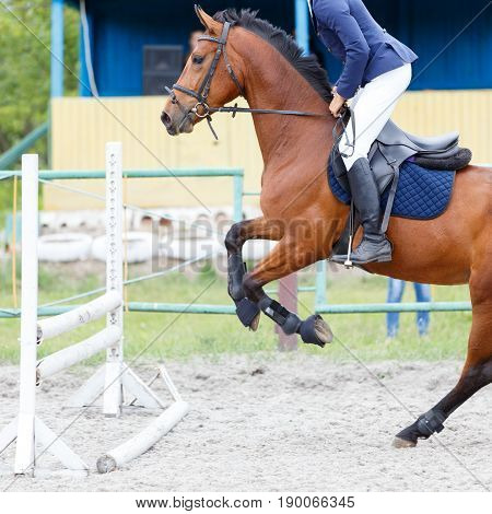 Bay horse with rider jumping over hurdle on show jumping competition