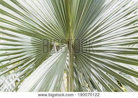 close up view of beautiful green gray palm leaf natural background