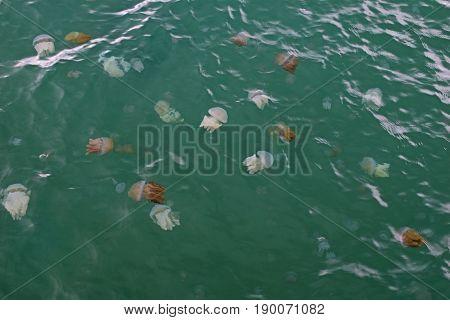 Jellyfish Box