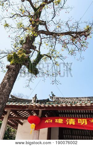 Tree In Court Of Guangxiao Temple In Guangzhou