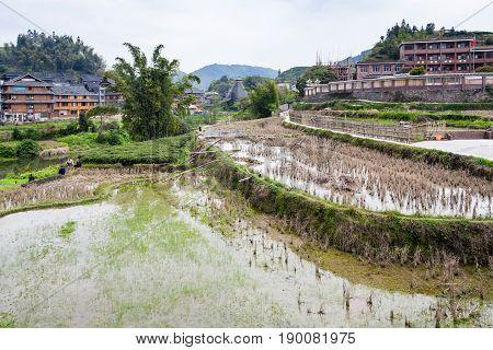 People Near Terraced Rice Fields In Chengyang