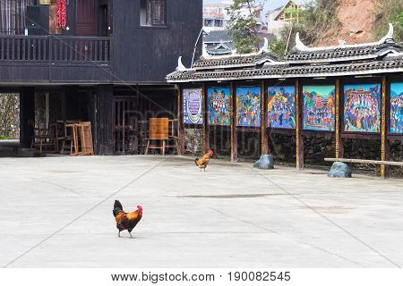 Cocks On Main Square In Chengyang Village