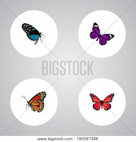 Realistic Azure Peacock, Milkweed, Butterfly And Other Vector Elements. Set Of Beauty Realistic Symbols Also Includes Blue, Bluewing, Purple Objects.