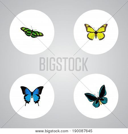 Realistic Demophoon, Common Blue, Green Peacock And Other Vector Elements. Set Of Beauty Realistic Symbols Also Includes Blue, Cypris, Yellow Objects.