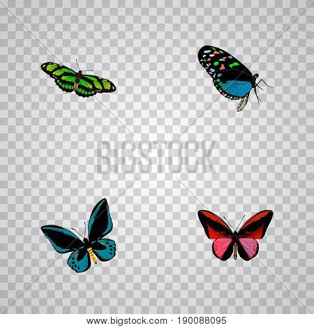 Realistic Hairstreak, Demophoon, Callicore Cynosura And Other Vector Elements. Set Of Moth Realistic Symbols Also Includes Sky, Bluewing, Cynosura Objects.