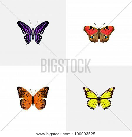 Realistic Danaus Plexippus, American Painted Lady, Archippus And Other Vector Elements. Set Of Butterfly Realistic Symbols Also Includes Butterfly, Monarch, Violet Objects.