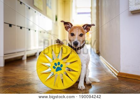 Dog Disc And Toy Ready To Play