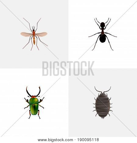 Realistic Ant, Gnat, Dor And Other Vector Elements. Set Of Bug Realistic Symbols Also Includes Green, Mosquito, Alive Objects.