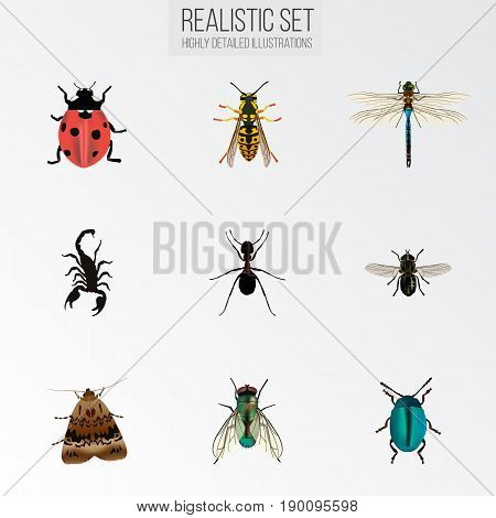Realistic Housefly, Midge, Bee And Other Vector Elements. Set Of  Realistic Symbols Also Includes Pismire, Wisp, Ladybug Objects.