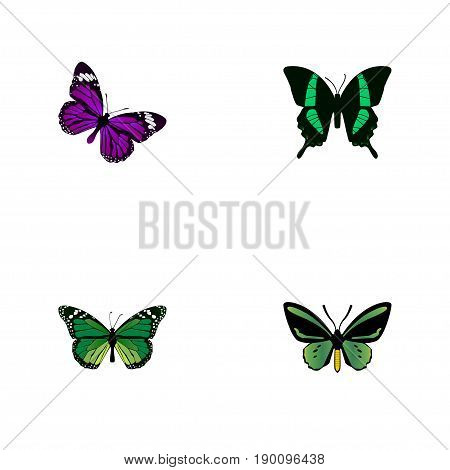 Realistic Butterfly, Birdwing, Beauty Fly And Other Vector Elements. Set Of Beauty Realistic Symbols Also Includes Beautiful, Green, Malachite Objects.