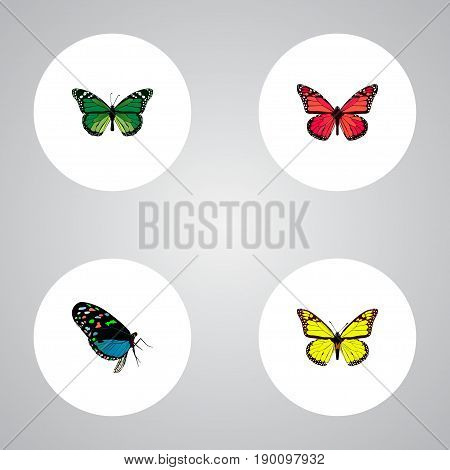 Realistic Birdwing, Azure Peacock, Hairstreak And Other Vector Elements. Set Of Butterfly Realistic Symbols Also Includes Yellow, Bluewing, Peacock Objects.