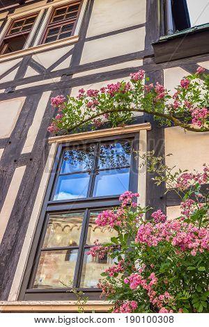 Beautiful window and pink flowers. Details. Wartburg Castle in Eisenach, Germany