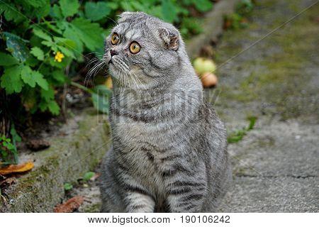 A gray pedigree cat sits on the street on an asphalt track