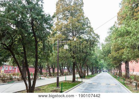Alley In Public Park In Beijing Imperial City